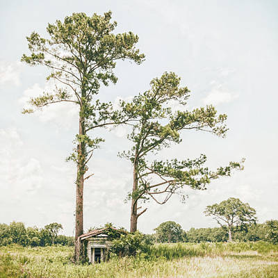 Old House Photograph - Treehugger by Humboldt Street