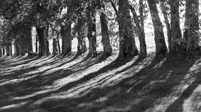 Treeline Print by Amy Tyler