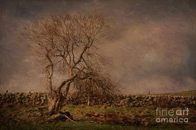 Painterly Photograph - Tree,lozere. by Robert Brown