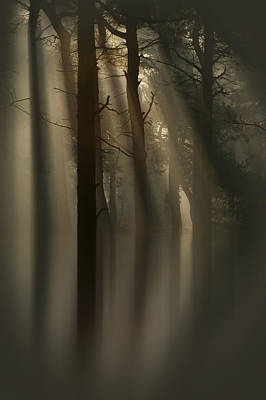 Trees And Light Print by Andy Astbury