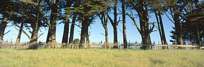 Mendocino Photograph - Trees And Wooden Fence, Mendocino by Panoramic Images