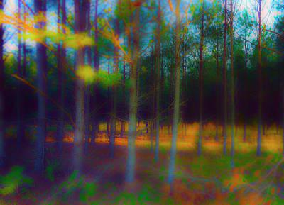Trees At Dusk Original by Jan W Faul