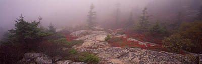 Maine Mountains Photograph - Trees Covered With Fog, Cadillac by Panoramic Images