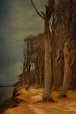 Trees Print by Heike Hultsch