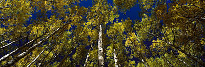 Trees In Forest Print by Panoramic Images