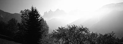 Dolomite Photograph - Trees On A Landscape, Dolomites, Alto by Panoramic Images