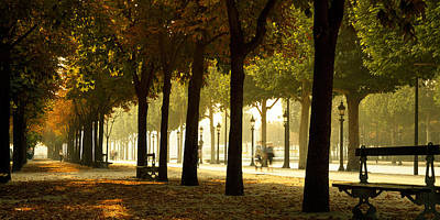 In A Row Photograph - Trees On Both Sides Of A Walkway by Panoramic Images