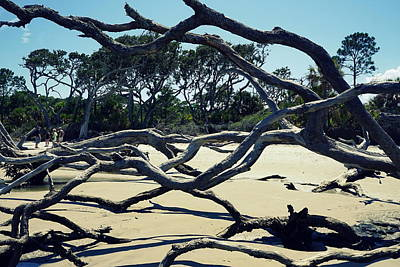 Trees On Jekyll Island Print by Laurie Perry