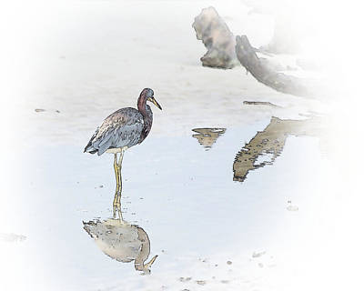Heron Photograph - Tricolored Heron On Shore In Digital Art by J Darrell Hutto