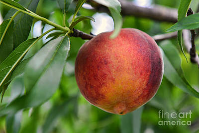 Nature Photograph - Tropic Beauty Peach by Olga Hamilton