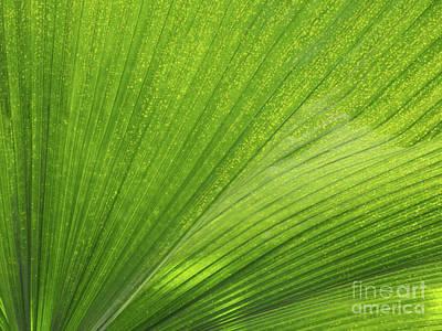 Tropical Abstract Print by Ann Horn