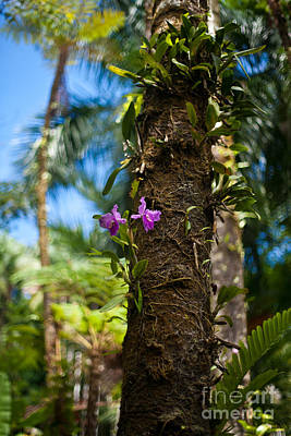 Orchids Photograph - Tropical Beauty by Mike Reid
