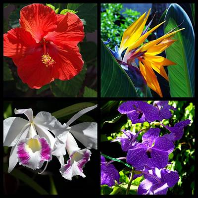 Tropical Flowers Multiples Print by Susanne Van Hulst