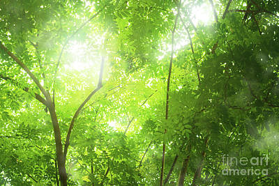 Tropical Forest Print by Atiketta Sangasaeng