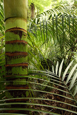 Rain Forest Photograph - Tropical Forest Jungle by Les Cunliffe
