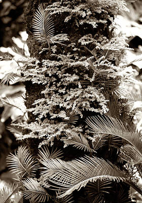 Plant Photograph - Tropical Forest by Marilyn Hunt