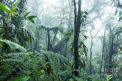 Forest Photograph - Tropical Rainforest - Monteverde Cloud Forest - Costa Rica by Matteo Colombo
