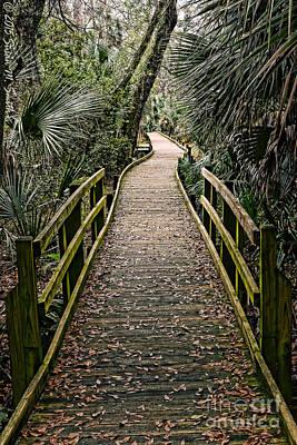 Susan M. Smith Photograph - Tropical Walk by Susan Smith