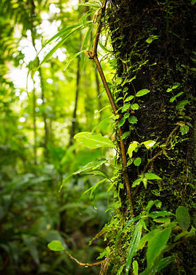 Rain Forest Photograph - Trunk Of The Jungle by Nicklas Gustafsson