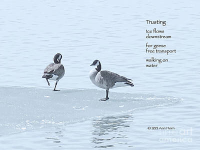 Trusting Print by Ann Horn