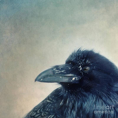 Crow Photograph - Try To Listen by Priska Wettstein
