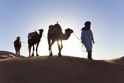 Tuareg Man With Camel Train, Sahara Desert, Morocc Print by Peter Adams