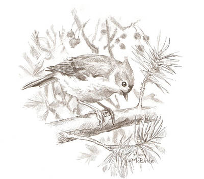 Titmouse Drawing - Tufted Titmouse by Abby McBride
