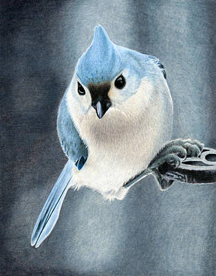Titmouse Drawing - Tufted Titmouse by Corrina Thurston