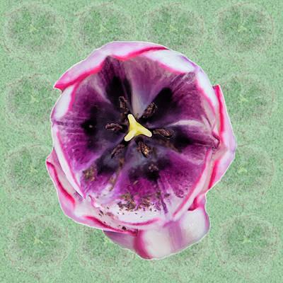 Appalachian Photograph - Tulip Abstract Square by John Haldane