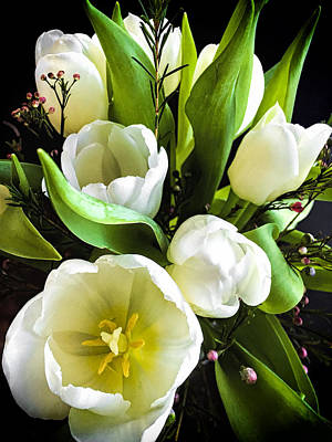 White Tulip Photograph - Tulip Bouquet by Andrew Soundarajan