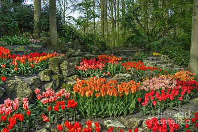 Tulpe Photograph - Tulip Rocks  by Rob Hawkins
