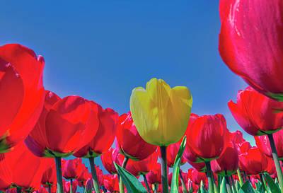 Holland Photograph - Tulip Sky by Nadia Sanowar
