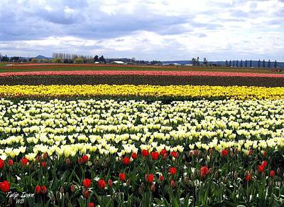 Multihued Photograph - Tulip Town 4 by Will Borden
