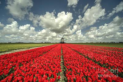 Tulpe Photograph - Tulip Windmill  by Rob Hawkins