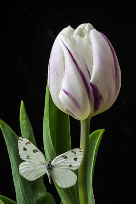 White Tulip Photograph - Tulip With White Butterfly by Garry Gay