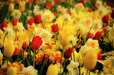 Tulips And Daffodils Print by Tamyra Ayles