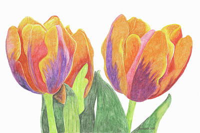 Blooming Drawing - Tulips In Bloom by Laurie With