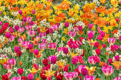 Flower Photograph - Tulips In Bloom by Nadia Sanowar