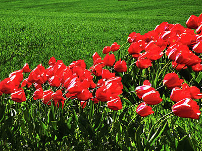 Tulips In The Wind Print by Steven  Michael