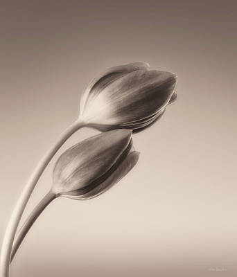 Interior Still Life Photograph - Tulips Monochrome by Wim Lanclus