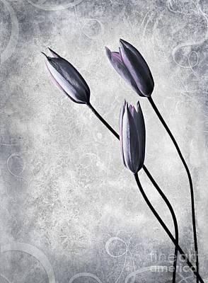 Tulip Digital Art - Tulips by Jacky Gerritsen