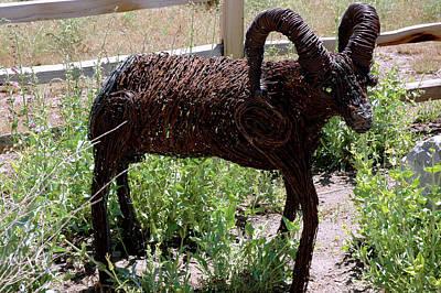 Sheep Photograph - Tumble Weed Sheep Reno Nevada by LeeAnn McLaneGoetz McLaneGoetzStudioLLCcom