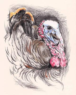 Wild Turkey Drawing - Turkey Tom by MM Anderson
