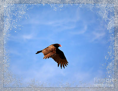 Turkey Vulture Print by Brenda Bostic