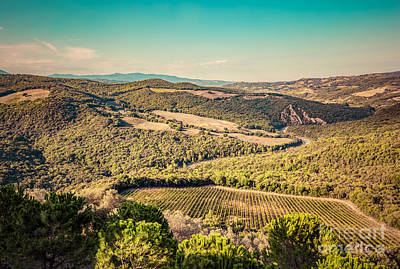 Vine Photograph - Tuscany Landscape With Green Meadows, Vineyards, Forests by Michal Bednarek