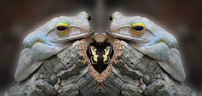 Toxic Twins Photograph - Twin Ugly Frogs About To Eat A Butterfly by Robert Frank Gabriel