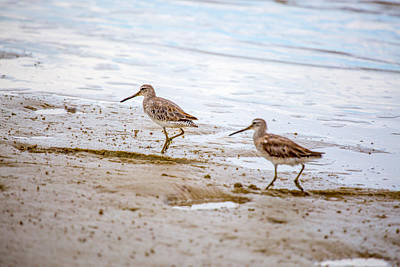 Light Photograph - Twin Willets By Darrell Hutto by J Darrell Hutto