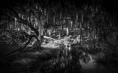 Twisted Oak Print by Marvin Spates