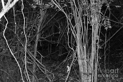 Memphis Photograph - Twisted Path by Amy Wilkinson