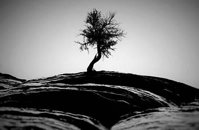 Twisted Tree Original by Carl Mazur
